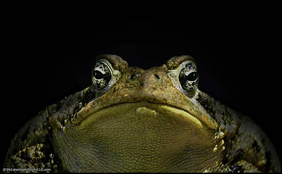 Toad Photograph - A Big Michigan Toad Ya by LeeAnn McLaneGoetz McLaneGoetzStudioLLCcom