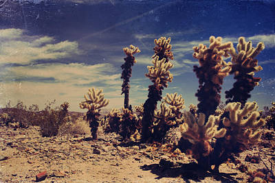 Cholla Photograph - A Billion Needles Went Into My Heart by Laurie Search
