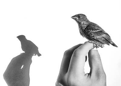 A Bird On The Hand Print by Caitlyn  Grasso