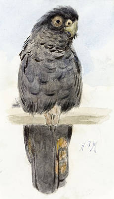 Parrot Painting - A Black Cockatoo by Henry Stacey Marks