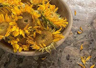 A Bowl Of Sunshine Print by Terry Rowe