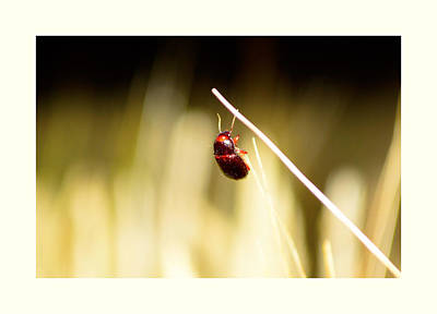 A Bug On A Wheat Straw Original by Toppart Sweden