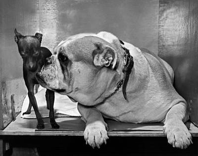 Introduction Photograph - A Bulldog And A Puppy by Underwood Archives