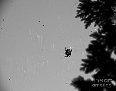 Black_white Photograph - A Busy Spider by Gerlinde Keating - Galleria GK Keating Associates Inc
