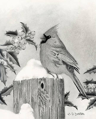 Black And White Bird Drawing - A Cardinal And Holly by Sarah Batalka