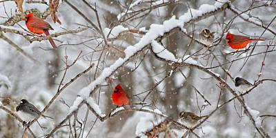 A Cardinal Snow Print by Betsy Knapp