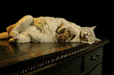 Catnap Photograph - A Cat's Life by Diana Angstadt