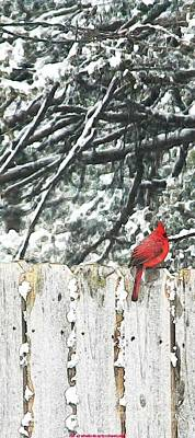 Childrens Book Illustration Painting - A Christmas Cardinal by PainterArtist FIN