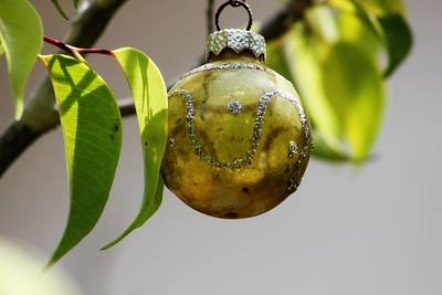 A Christmas Ornament Any Tree Print by Carolina Liechtenstein