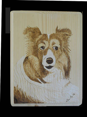 Pyrography Drawing - A Collie by H Leslie Simmons