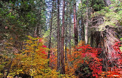 California Photograph - A Colorful Forest by Lynn Bauer