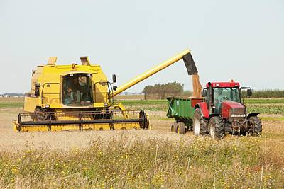 A Combine Harvester Print by Ashley Cooper