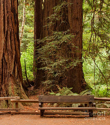 Bench Photograph - A Comfortable Resting Place by Charles Kozierok
