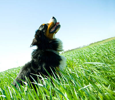 A Cute Dog On The Field Print by Michal Bednarek