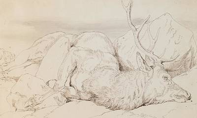Watercolor With Pen Drawing - A Dead Stag by Sir Edwin Landseer