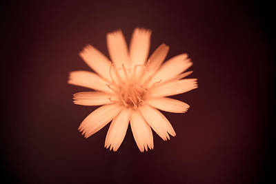 Peaches Photograph - A Delicate Flame by Shane Holsclaw