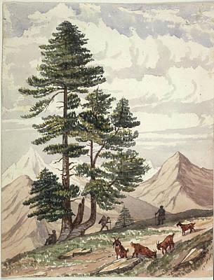 Hillman Photograph - A Deodar Tree by British Library