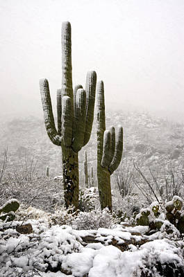 A Desert Southwest Snow Day  Print by Saija  Lehtonen