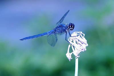 A Dragonfly V Print by Raymond Salani III