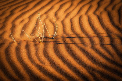 Surface Photograph - A Dream Of Water - Namibia Sand Dune Photograph by Duane Miller