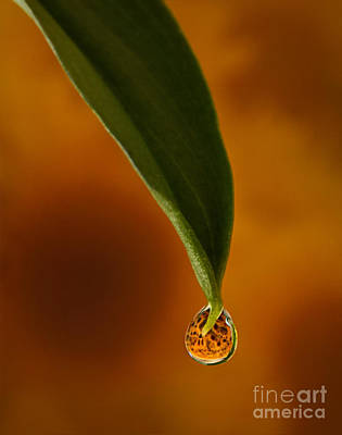 Water Drops Photograph - A Drop Of Sunshine by Susan Candelario