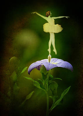 Balloon Flower Photograph - A Fairy In The Garden by Rebecca Sherman