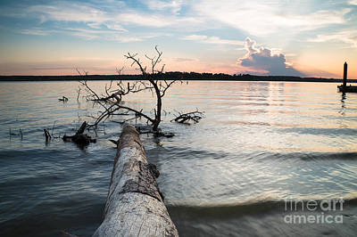 A Fallen Tree And The Evening Sky Print by Ellie Teramoto