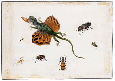 Herman Henstenburgh Painting - A Flying Lizard Surrounded By Beetles And Other Insects by Herman Henstenburgh