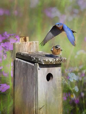 Bluebird Digital Art - A Fresh Start by Lori Deiter