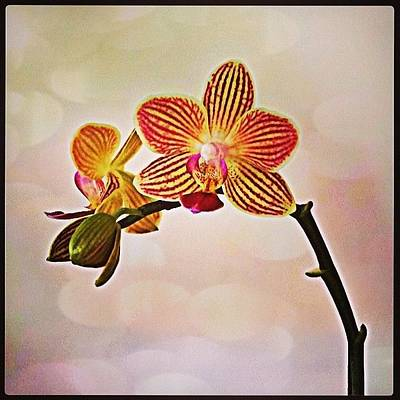 Orchids Photograph - A Green Thumb Never Goes Unpunished by Katie Phillips