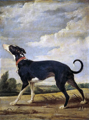 Greyhound Painting - A Greyhound Lurking by Paul de Vos