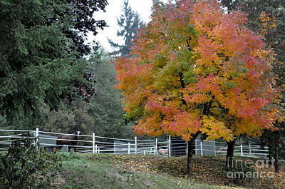 Nature Photograph - A Horse Behind The Fence by Tanya  Searcy
