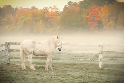 A Horse With No Name Print by K Hines