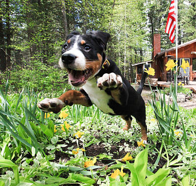 Puppy Photograph - A Joyful Spring by Aaron Aldrich