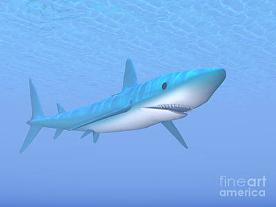 A Large Blue Shark Swimming Quietly Print by Elena Duvernay