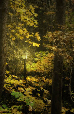 A Light In The Autumnal Forest Print by Diane Schuster