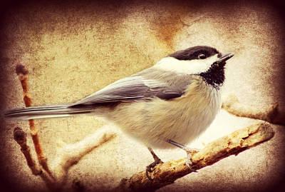 Warbler Digital Art - A Little Bird Told Me by Aurelio Zucco