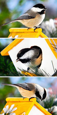 Cute Bird Digital Art - A Little Bird Told Me - Three Chickadees Triptych by Christina Rollo