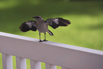 Mockingbird Photograph - A Little Visitor Northern Mockingbird by Terry DeLuco