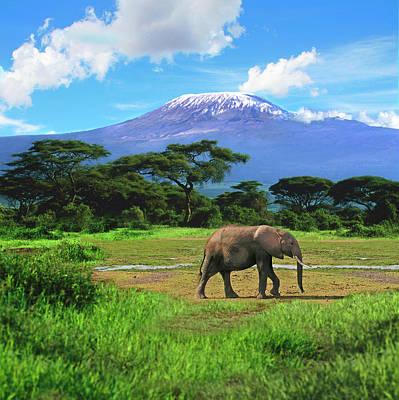 Refuge Photograph - A Lone African Elephant (loxodonta by Miva Stock