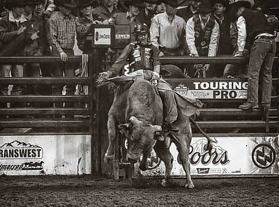 A Lot Of Bull At The National Stock Show- Sepia Print by Priscilla Burgers