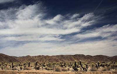 Cholla Photograph - A Mad World by Laurie Search