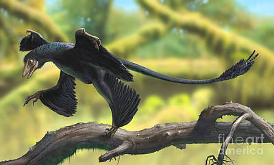 Microraptor Digital Art - A Microraptor Perched On A Tree Branch by Sergey Krasovskiy