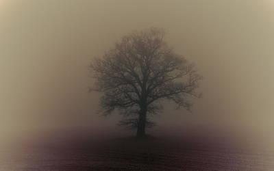 A Misty Morning Print by Chris Fletcher