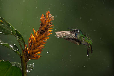 Hummingbird Photograph - A Moment In Time by Chris Jimenez
