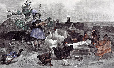 A Morning Call Chicken A.w Print by English School
