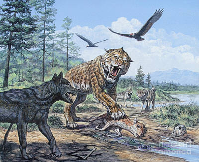A Pack Of Canis Dirus Wolves Approach Print by Mark Hallett