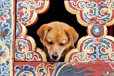 A Privileged Dog Peeks Through An Print by Art Wolfe