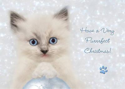 Cuddly Digital Art - A Purrrfect Christmas by Lori Deiter