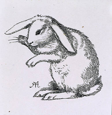 A Rabbit Print by British Library